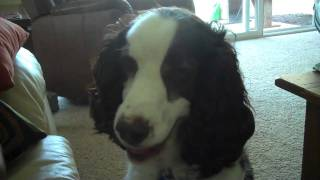 Training Your Dog To Accept Ear Medication