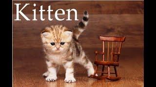 Как нарисовать котенка, #draw, как нарисовать маленького кота, рисуем котенка поэтапно