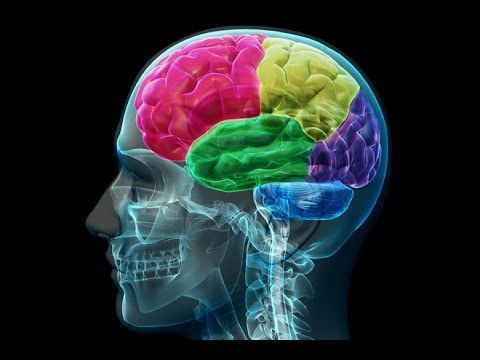 Anatomy and Physiology of Nervous System Part Brain - YouTube