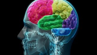 Video Anatomy and Physiology of Nervous System Part Brain download MP3, 3GP, MP4, WEBM, AVI, FLV Juni 2018