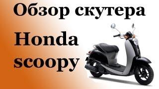 Обзор скутера Honda scoopy