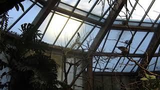 鳥放し飼いエリア Bird house 2018 0216