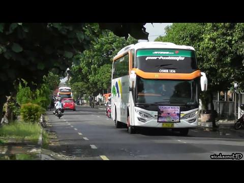 Ketika Rombongan Bus Nabrakin Ranting Pohon   PO METROPOLITAN