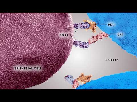 PD-L1 Testing and Developmental Process for Companion Diagnostic Tests