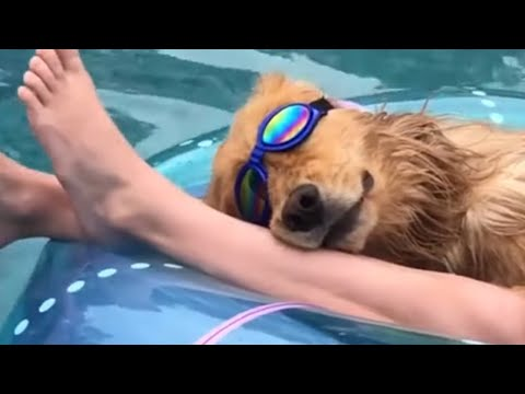 Super cool pup chills out on pool floatie