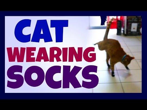 Putting Socks On My Cat