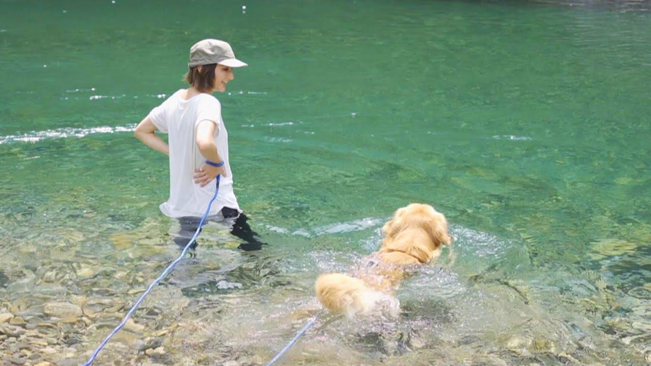 大好きな川だと得意げに泳ぐゴールデンが可愛いw