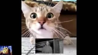 Кот смотрит телевизор и переживает!
