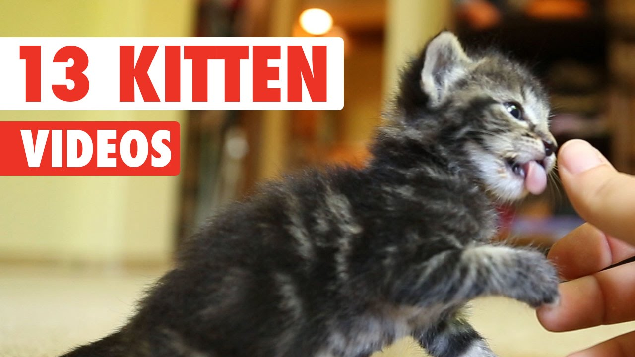 funny kittens compilation