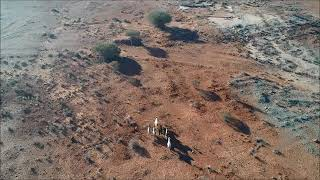 Goats run to Eastern Jaspilite mine Mt Magnet