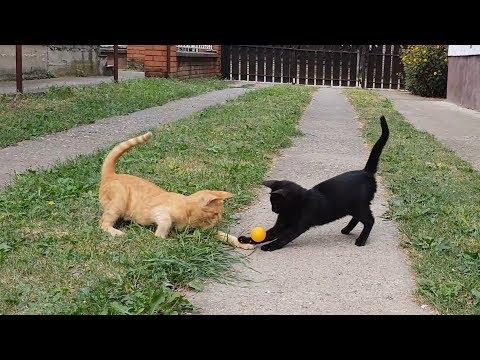 When Kittens Play Football