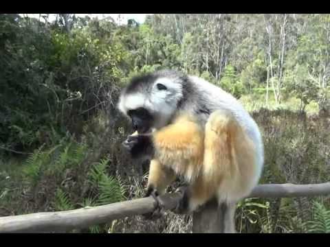 Haighy's Madagascar adventure Part 1