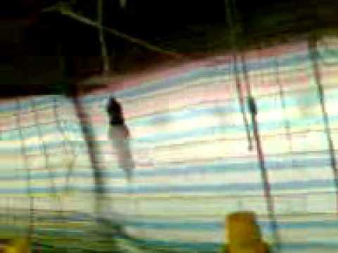 Caca Handika - Air Mata Bawang ( Ilyas )