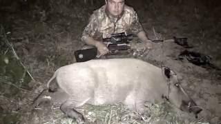Охота с ночным прицелом на кабана видео