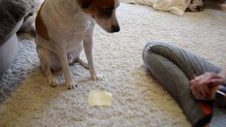 no1 5 life hacks for dogs how to annoy your dog