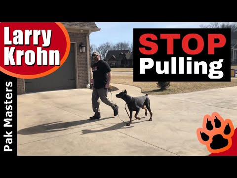 How to teach any dog to stop pulling and walk nicely on a loose leash