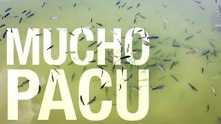Pacu Paradise - Fishing in EAK (Drone shots with DJI Mavic Mini)
