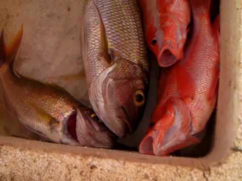 Traditional Handline Fishing Catch - Mindoro Philippines