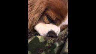 Sleeping beauty snoring LOUDLY!