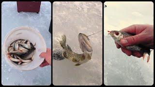 Знатный клёв Плотвы на мормышку и Щука на жерлицы Зимняя рыбалка 2021