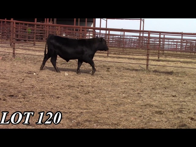 Mead Angus Farms Lot 120