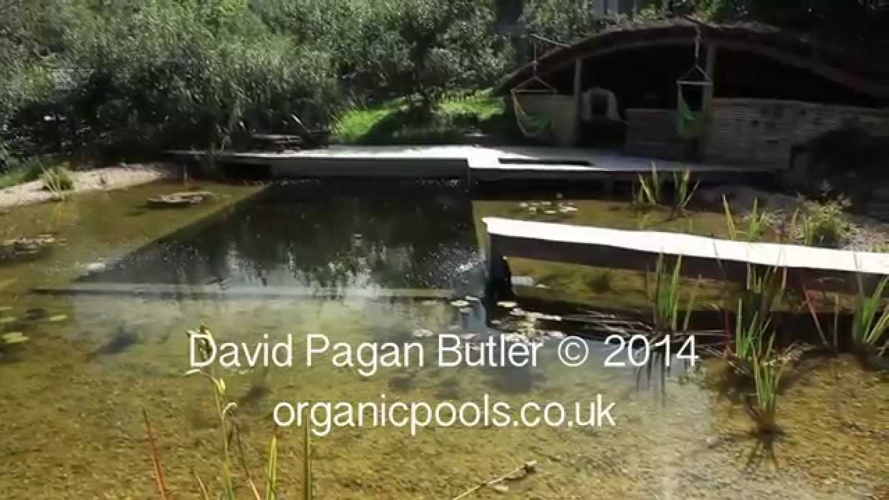 OLIVE - Natural Swimming Pool Filter | Indiegogo
