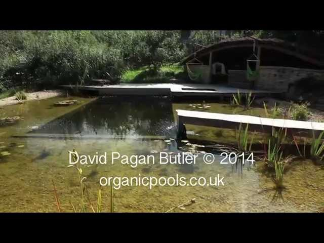 Self-builds: Natural swimming pool made using larch wood – Life ...