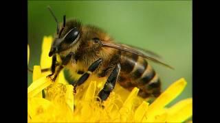Доклад пчеловодство в Молдавии.