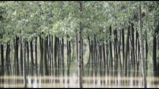 Italy-China Partnership: Poplar-based Agroforestry Benefits Millions