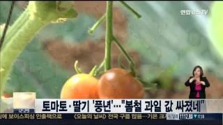 """토마토ㆍ딸기 '풍년'…""""봄철 과…"""