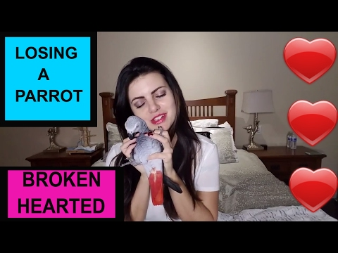 When Your Parrot Dies And How To Deal With The Greif | PARRONT TIP TUESDAY