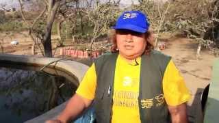 Perú: Mujeres y árboles de tara contra la degradación de los suelos
