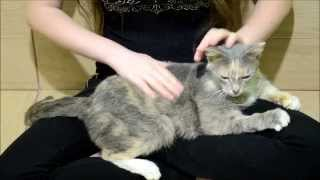 Гостиница для кошек Екатеринбург Кошка в добрые руки ,Малышка