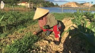 Hướng dẫn chăm sóc rau cải lúc mới trồng - Kim Kim Vlogs