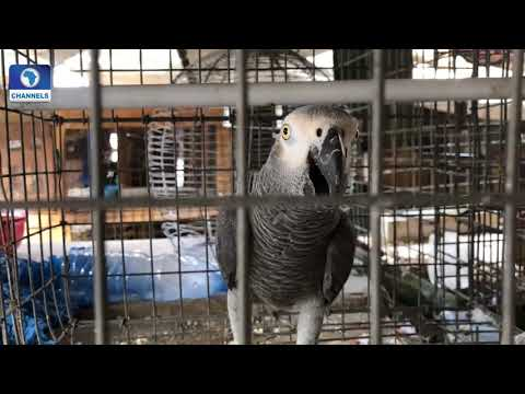 The Way Out Of Illegal Wildlife Trade Pt.2 |Earthfile|