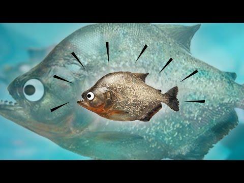 เกมที่เราได้รับบทเป็นปลาและต้องกินเพื่อให้ตัวใหญ่! | Feed And Grow Let's Play (1)