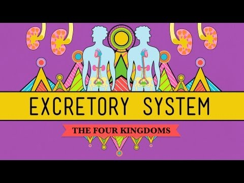 The Excretory System: From Your Heart to...