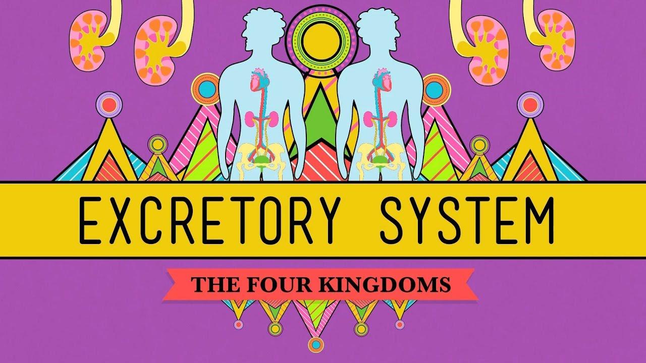 medium resolution of The circulatory system   Systems in the human body   Siyavula