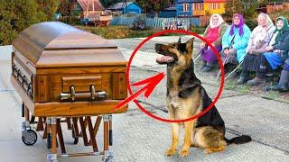 Пёс пришёл на похороны своего хозяина. То что произошло дальше, поразило всех до слёз...