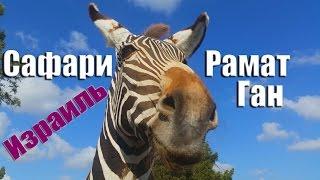 """Зоопарк """"Сафари"""" Рамат Ган. Израиль"""