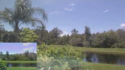 Hurricane Irma Spring Hill FL Weather Live Stream Webcam