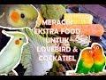 Meracik Ekstra Food Bergizi Untuk Lovebird Cockatiel  Mp3 - Mp4 Download