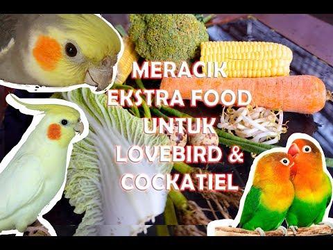 MERACIK EKSTRA FOOD BERGIZI UNTUK LOVEBIRD & COCKATIEL