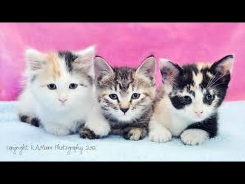 cute kittens funny videos cute cat compilation ever