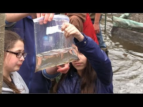 Counting Eels in Staten Island's Bluebelt