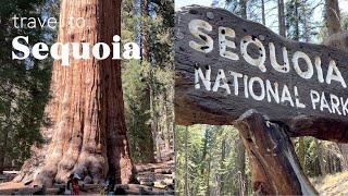 미국 브이로그 | LA 여행 | 세콰이어 국립공원 | …