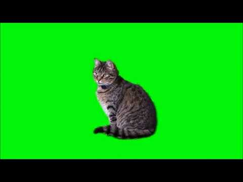 Jingle Bells Sung By Cats FINAL