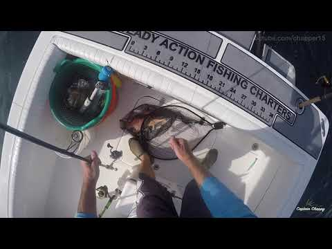 How To Rig For Hogfish. Best Methods!