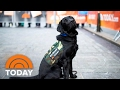 TODAY Puppy Charlie Making Big Strides In Training: See What He Can Do! | TODAY