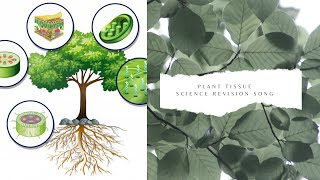 Plant tissue science revision song